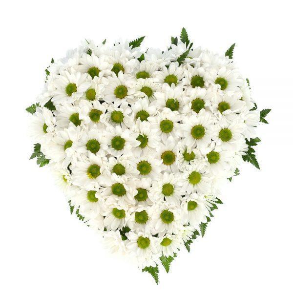 Coração de margaridas brancas para funeral